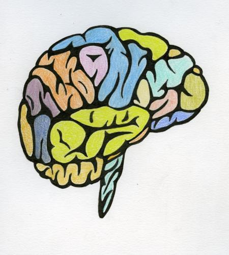Brain Project 6